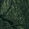 Verde-Guatemala_1000x